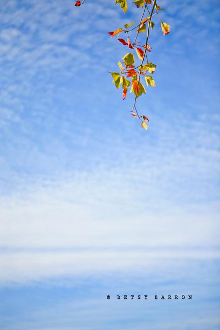 fall, autumn, leaves, sky