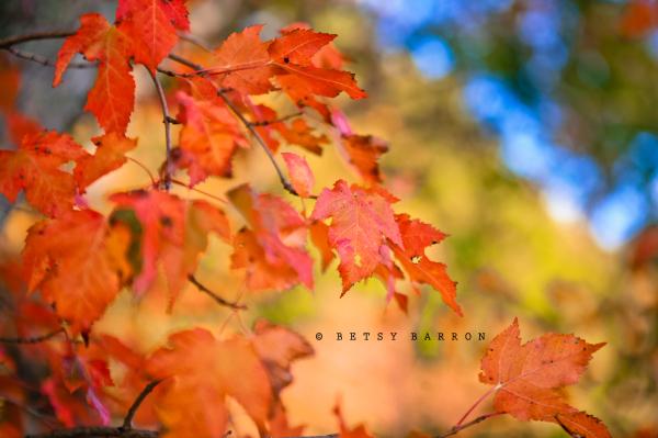 fall, autumn, leaves, color