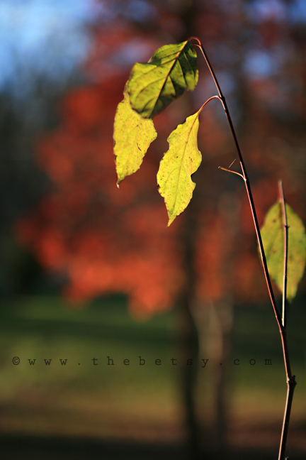 leaves, leaf, green, red, bokeh, fall, autumn
