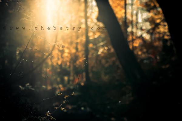 tree,, autumn
