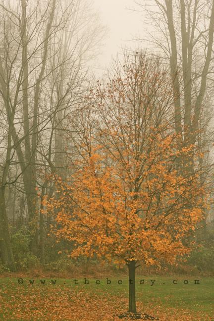 tree, autumn, mist, fog, cold