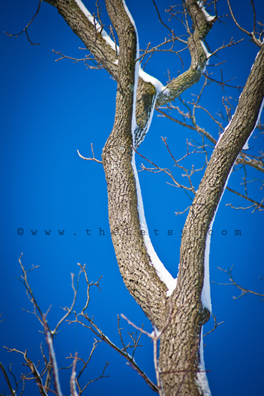 snow, trees, blue, sky, winter, sun, morning