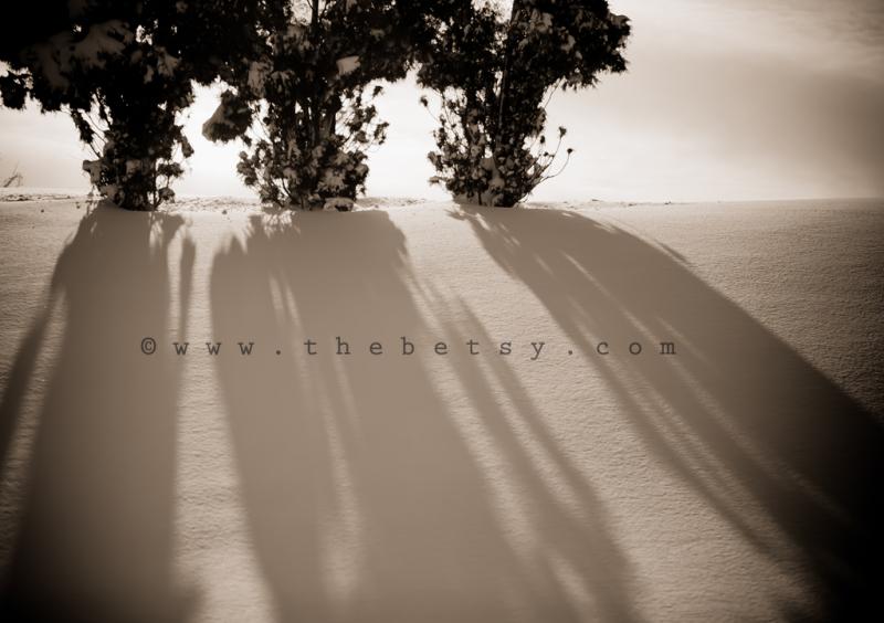arborvitae, shadows, snow, sun, morning, winter