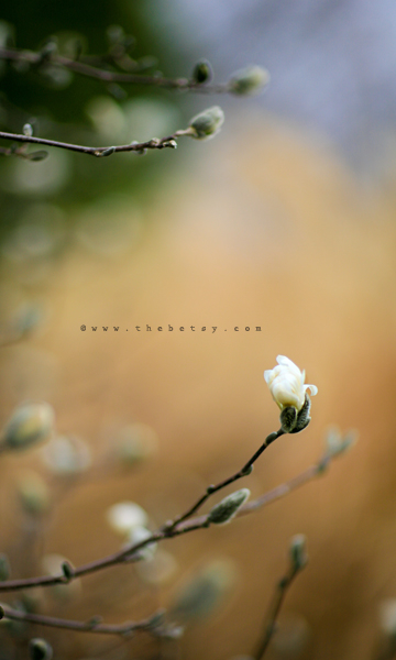 bloom, tree, spring