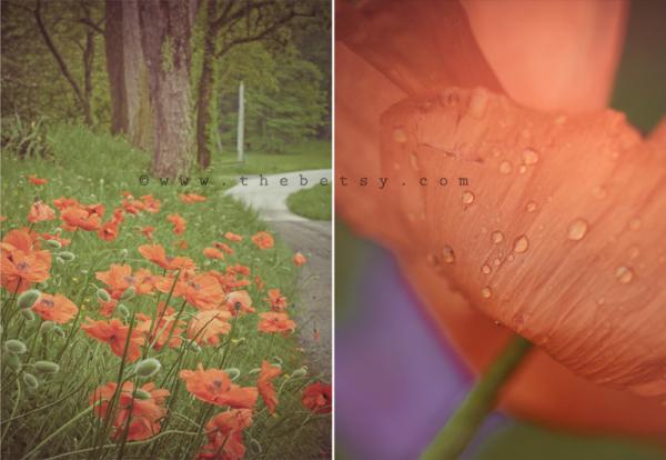flower, poppy, poppies, orange, field, farm