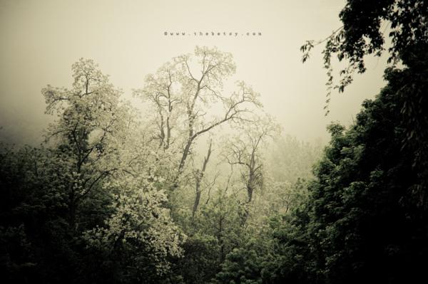 mist, trees, malvern, spring, green