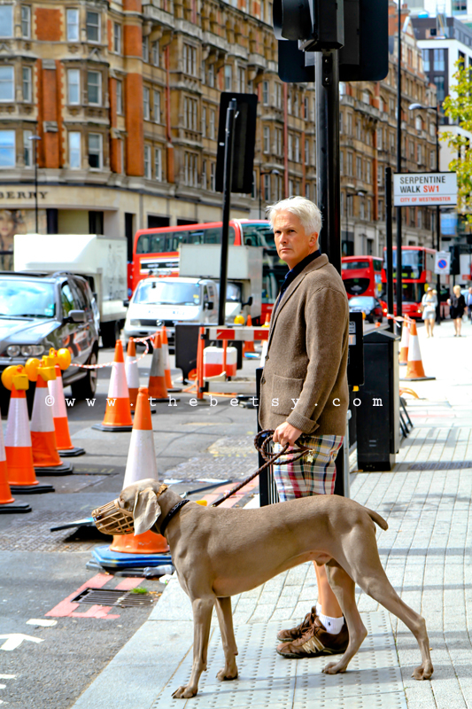 london, street, weimaraner, dog, street. traffic,