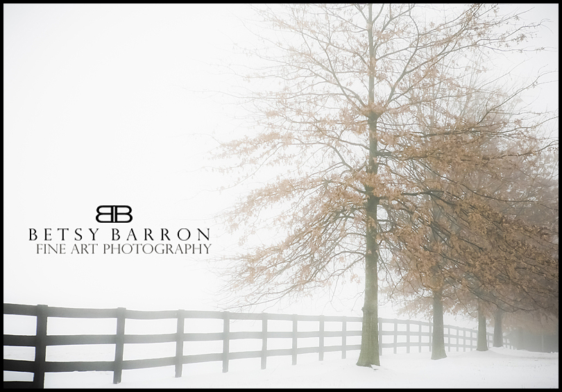 trees, fence, winter, snow, orange, leaves, white