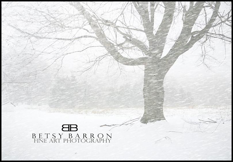 white, snow, trees, winter, field, farm, weather