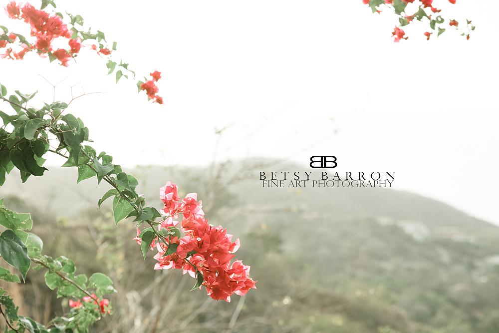 plant, flower, blossom, pink, mountain, coast, sky