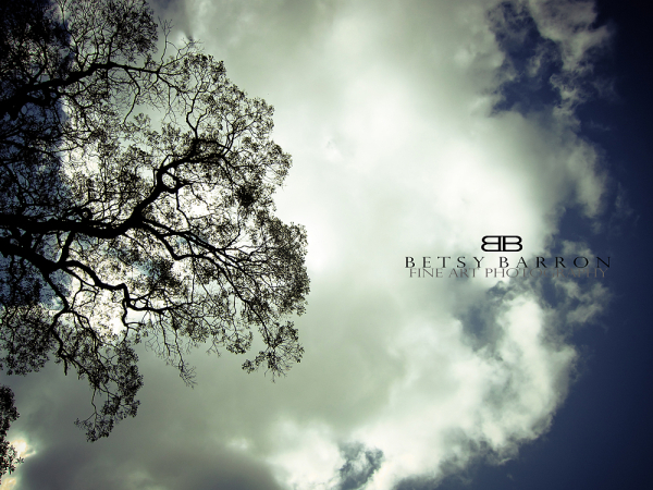 clouds, tree, sky, sun, blue