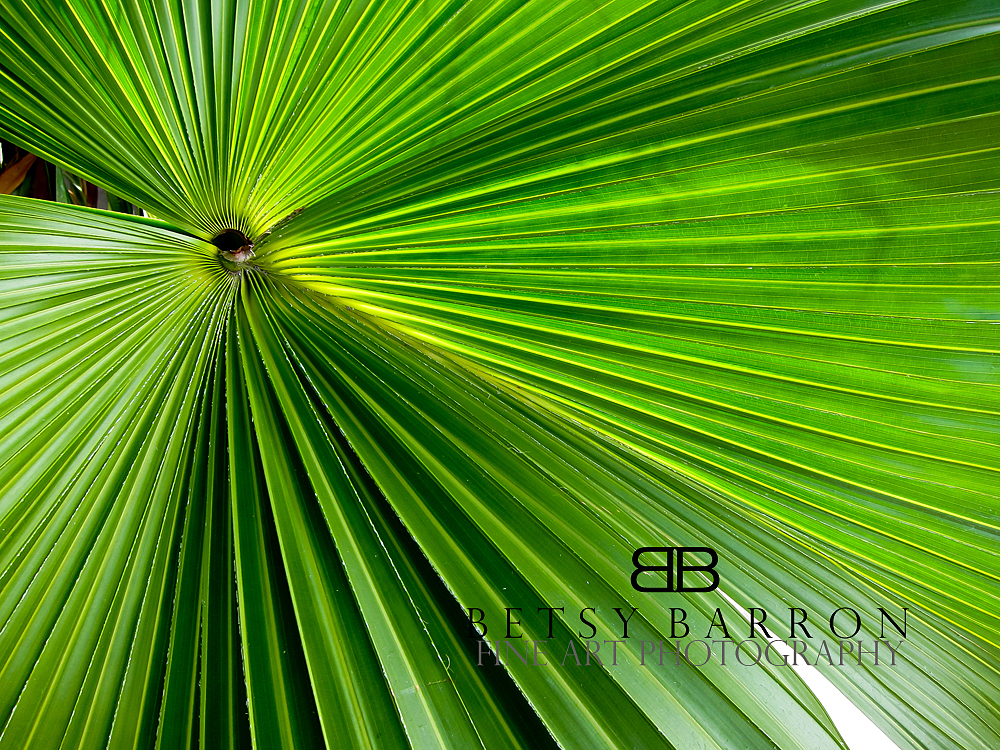 plant, palm, tropical, costa, rica, green