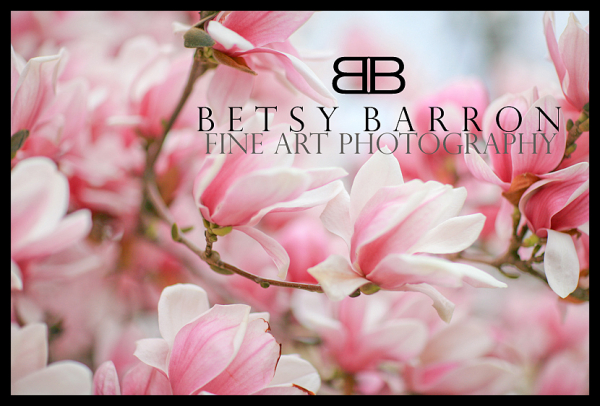 spring, blooms, blossoms, magnolia, pink