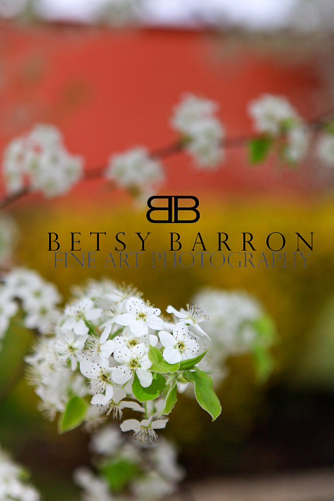 blossoms, spring, cherry, white, bokeh