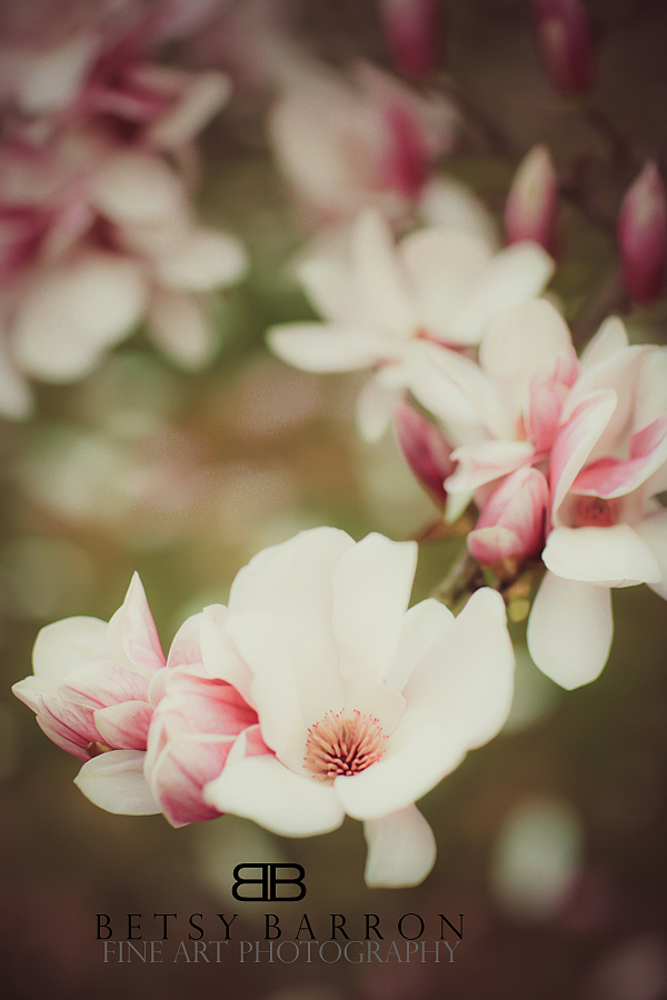 magnolia, pink, flower, easter
