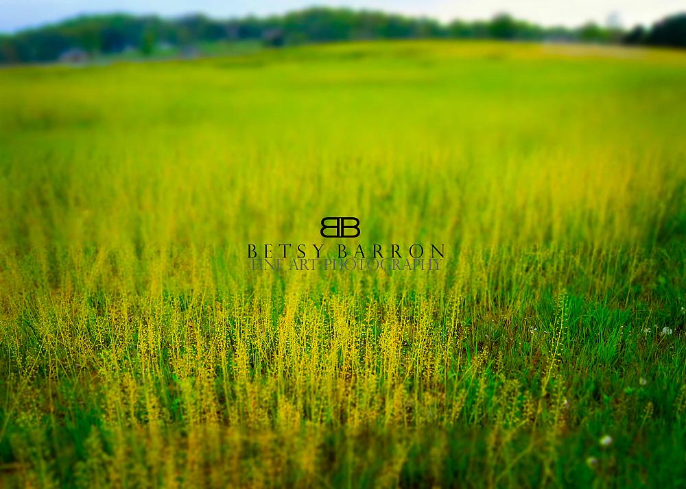 yellow, rocket, flowers, landscape, spring