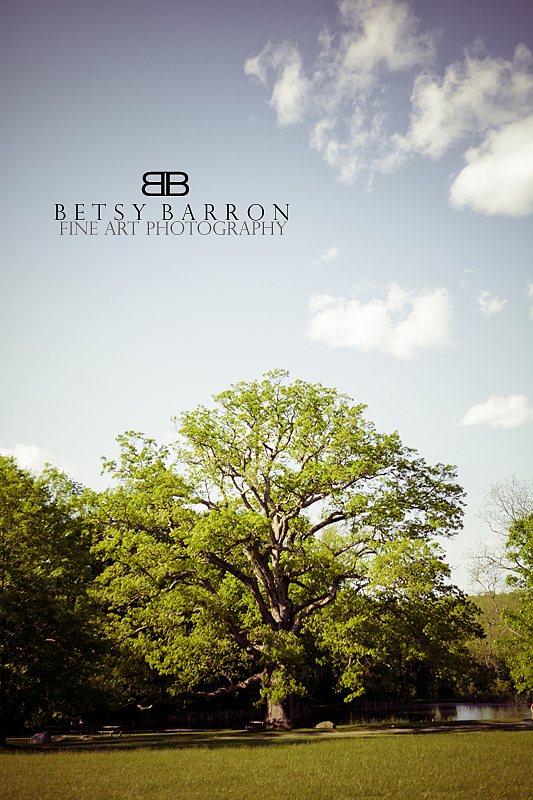 penn, oak, tree, springton, manor, farm, landscape