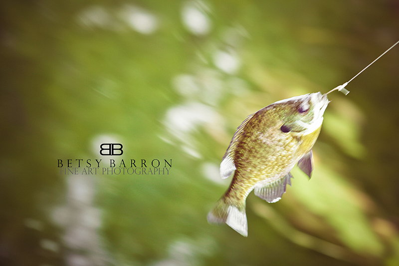 fish, fishing, water, green, line, hook