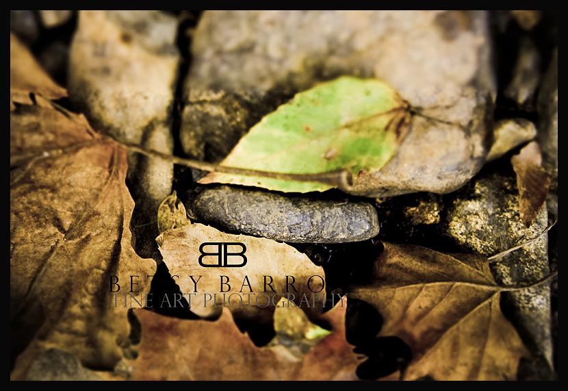 leaves, plant, fall, autumn, rocks, creek