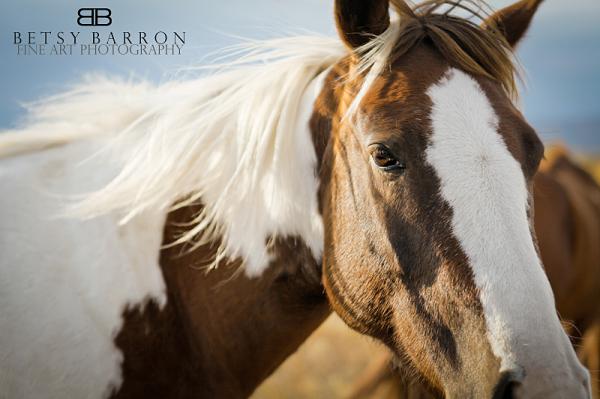 horse, animal, soft, west, wyoming, sky, eye