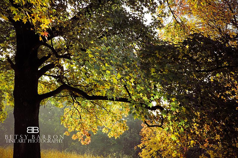 autumn, fall, leaves, orange, valley, forge, sunri