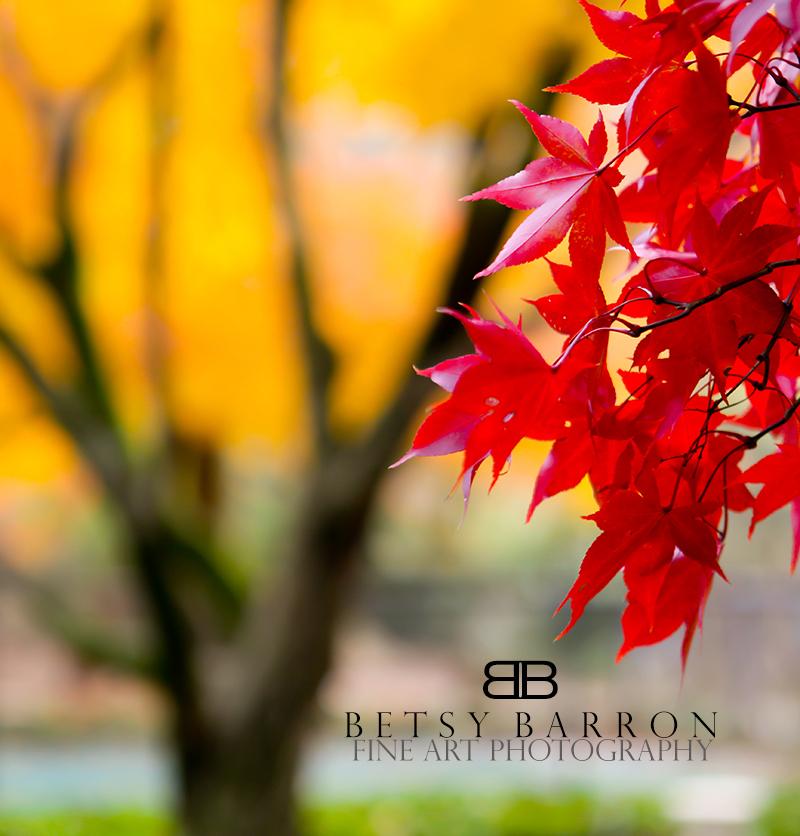 autumn, leaves, red, yellow, tree, fall, spotlight