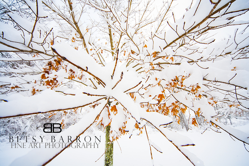 snow, tree, trees, leaves, white, winter, branch