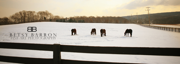 home, winter, snow, fence, trees, horse, pano
