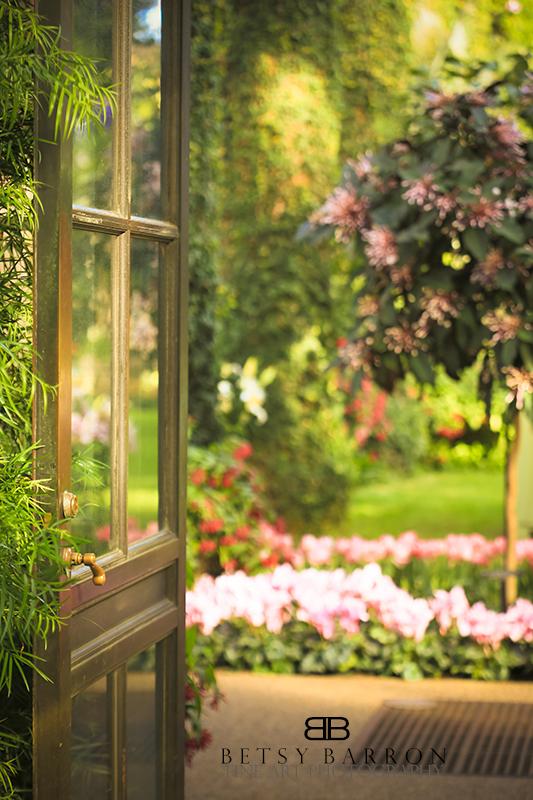plants, door, reflection, garden, warm
