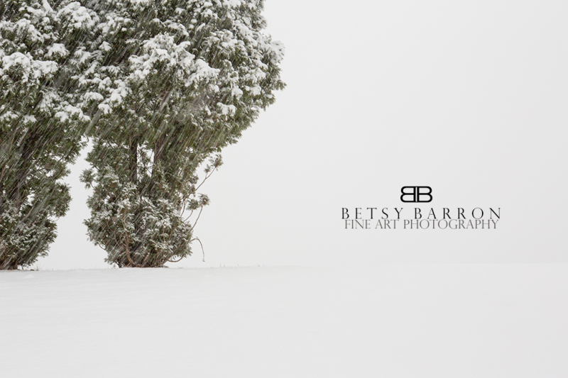winter, snow, white, trees, cold