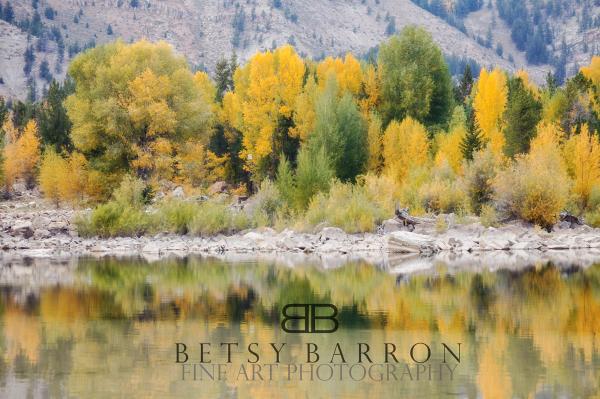 wyoming, lake, reflection, teton, aspen, tree