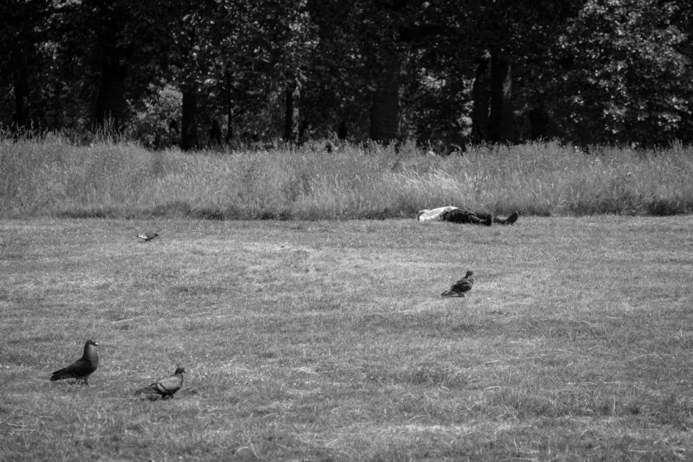 Hyde Park Napper