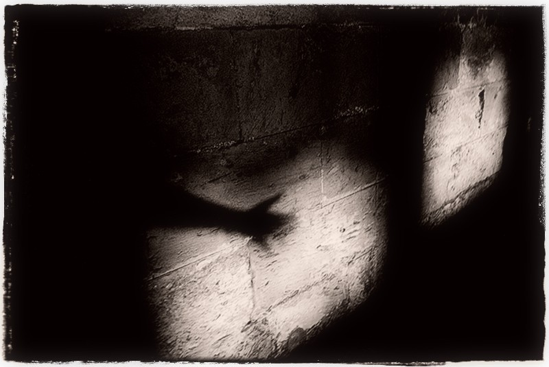 Hikari shadow b&w