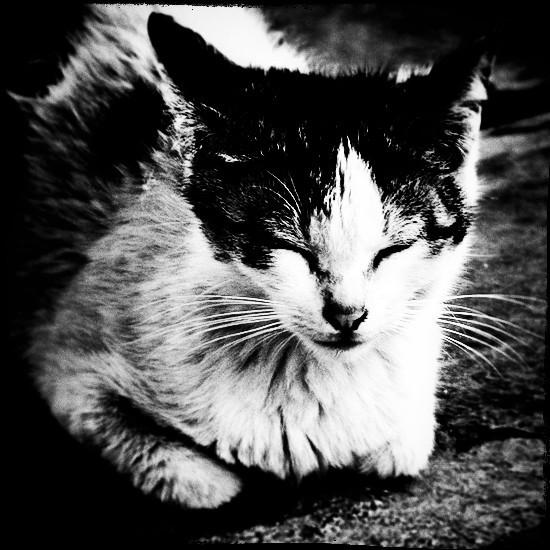 cat japan b&w