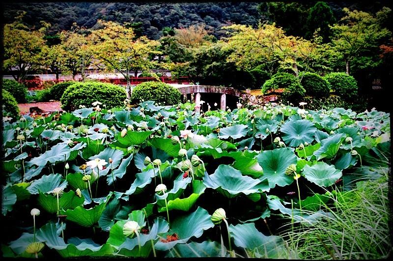 landscape japan garden