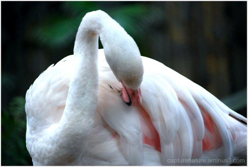Pecking thyself