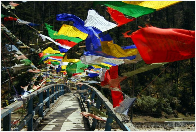 Lachung Sikkim India Yamthung Valley Bridge Flags