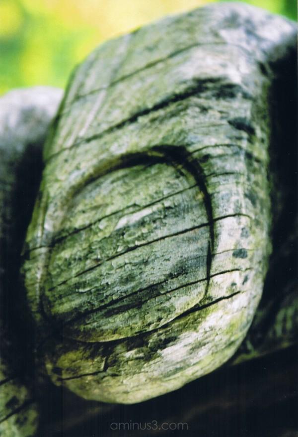 tree sculpture in Everglades Garden