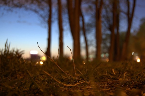 Brushwood in the night