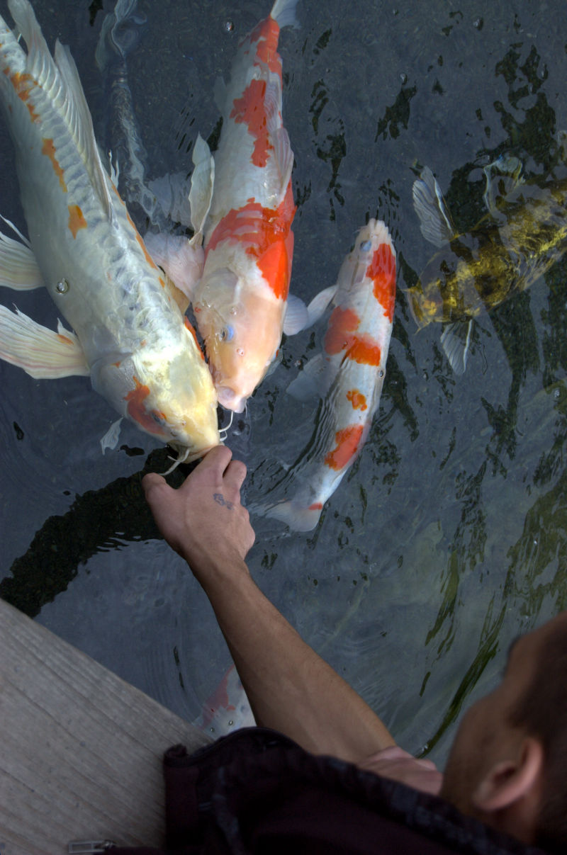 Fish talker