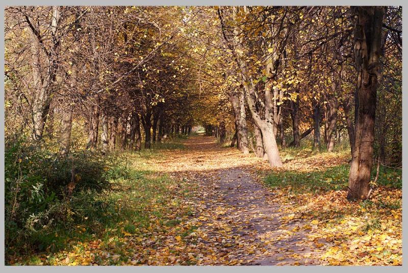 Golden autumn 4