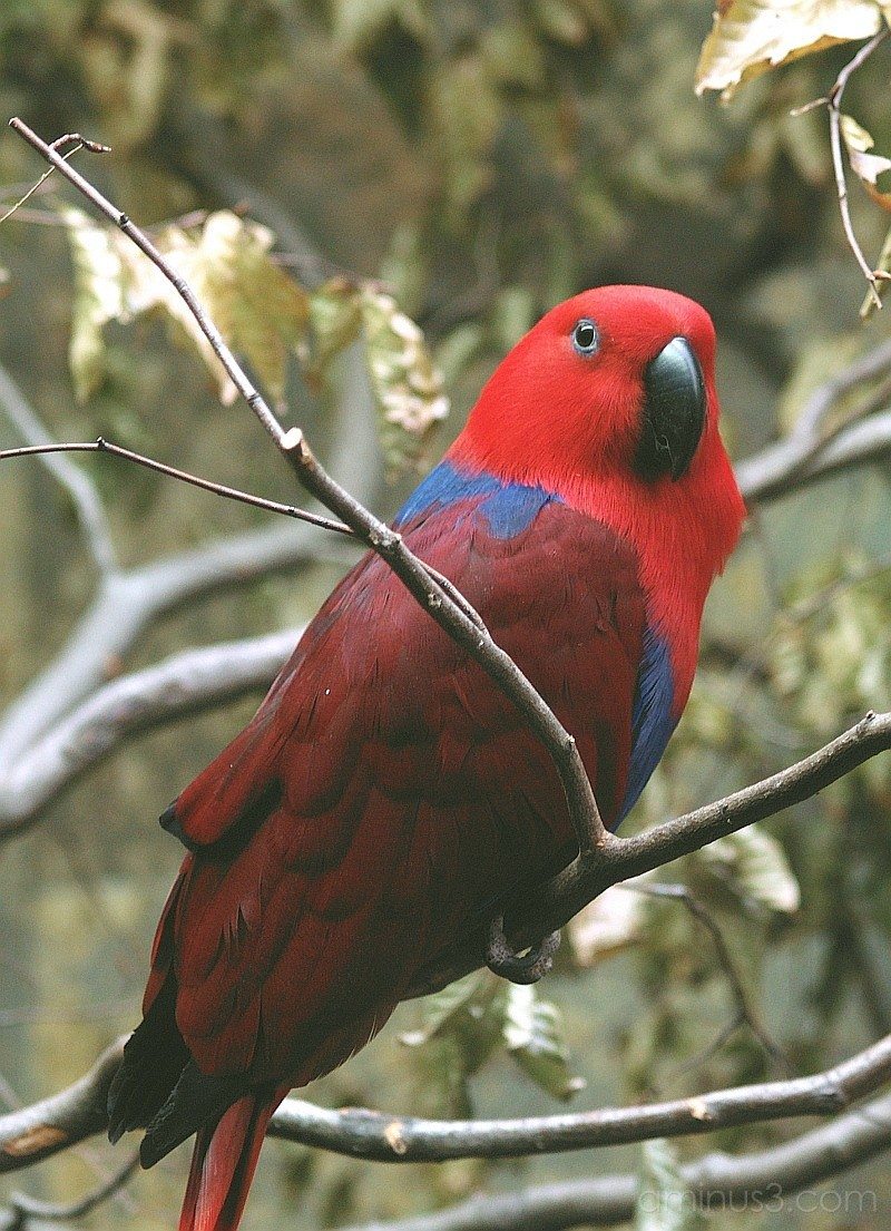 red parrot zoo wuppertal