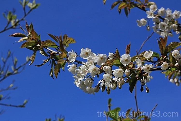 Frühlingserwachen / Spring has arrived