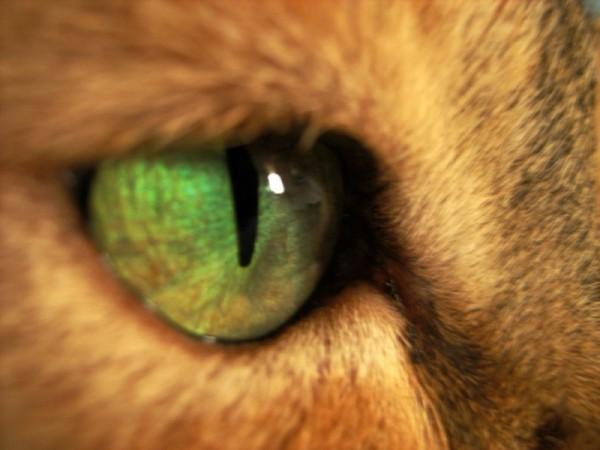 cat eye macro
