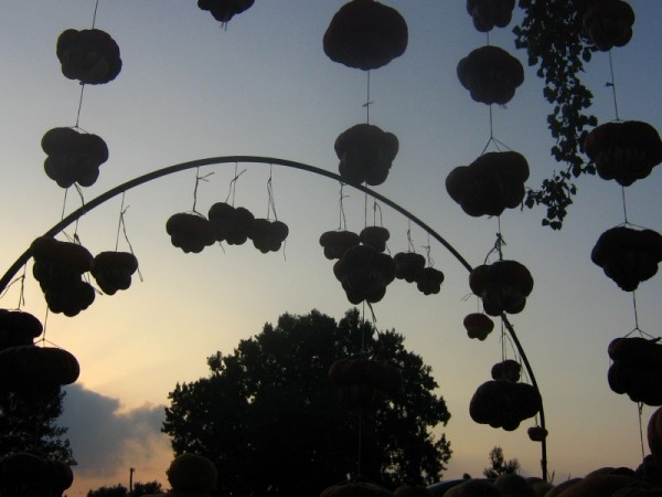 Pumpkins Silhouettes