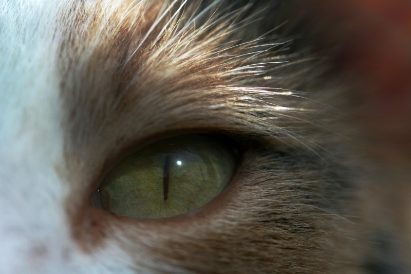 cat eye macro green