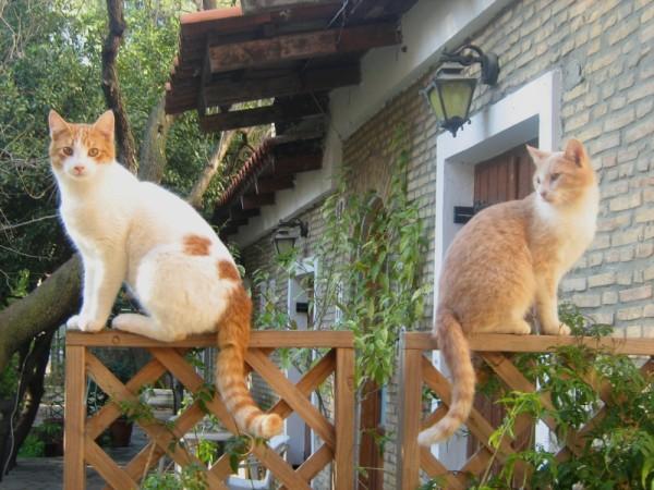 garden posing cats nature