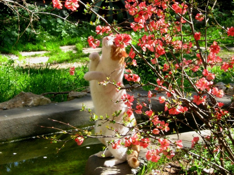 garden posing cats nature spring