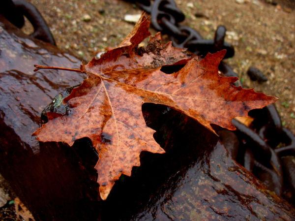 fallen keaf autumn