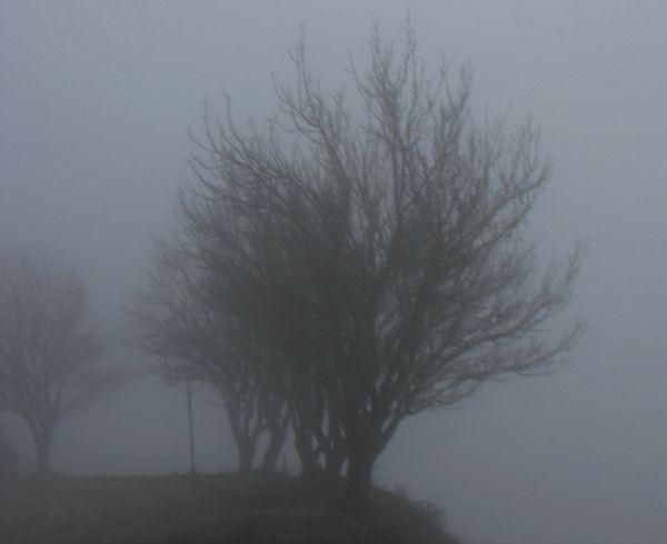 trees fog mist